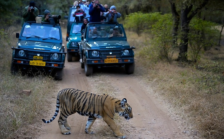 BASK IN THE WILDERNESS OF JUNGLES WITH THESE TOP 10 SAFARIS IN INDIA