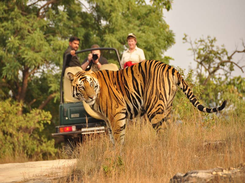 Ranthambore City Descriptions